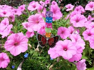 Pink Petunias Louisiana