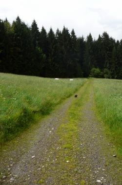 Cesta přes louku