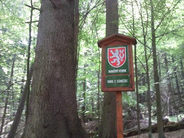 Památný strom - Smrk u Zámečku