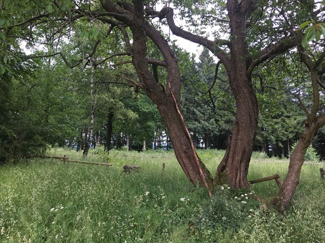 Alter verwilderter Friedhof