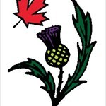 canuck thistles