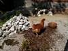 ...auch ein blindes Huhn.....