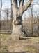 The clement oak-1