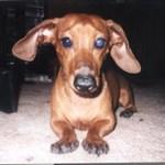 rusty_da_dog