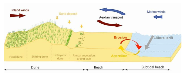 GC6WT0Y Freshwater Coastal Sand Dune - Burlington Beach ...