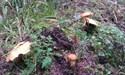 Maxovou oborou - houbicky 18.9.2011 11-39-59