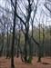 verschlungener Baum