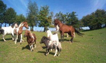 alibi des chevaux
