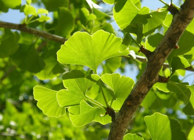Gc3nmzk arboretum nanceiacum unknown cache in grand est france created by cdrikb nane54 - Arbre africain en 7 lettres ...