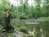 2011.05.03 nice little pond near Waldweiher-Cache