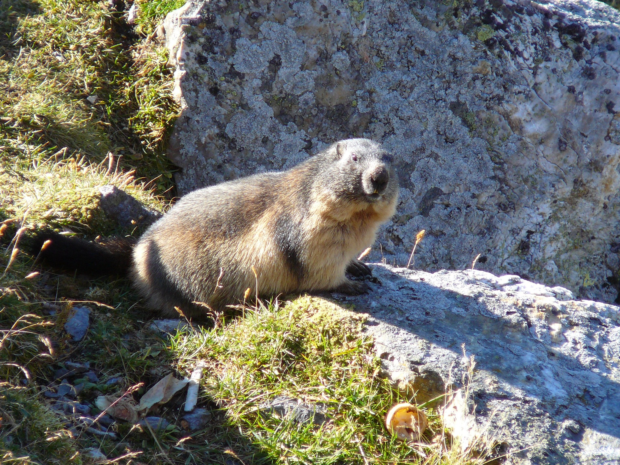 Watch out for marmot muggles! Photo by geocacher parda.