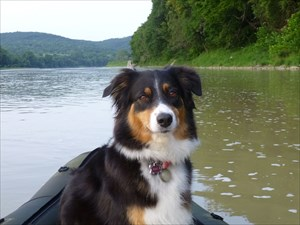 """My """"Little Wolf"""" Jewel On The River"""