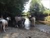 Pferde05