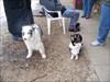 Geocachy doggies!