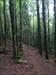 Frühlingswald ohne Gps-Empfang