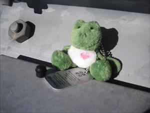 Froggie i el seu primer catxé