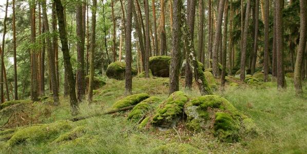 Kameny s mechem v lese