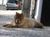 01 uma espécie de leão log image