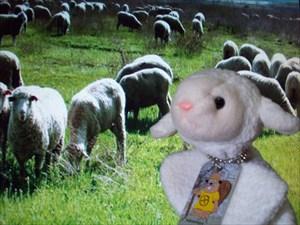 Lamb Chops and Family