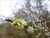 der Frühling steht vor der Tür