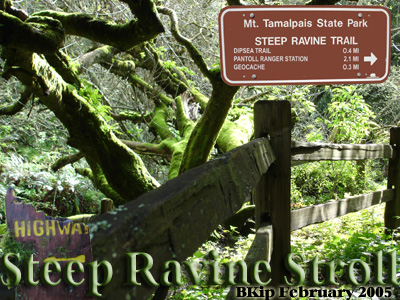Steep Ravine Stroll