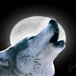 Cache N' Wolf