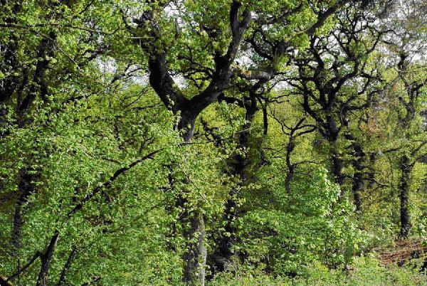 En dejlig skov