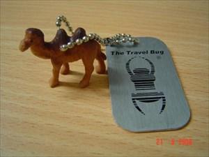 TB Camel.JPG
