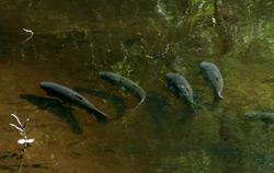Ryby na mělčině