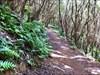 Trilho - Trail 1