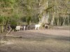 Tiere des Weges