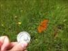 Shark Coin in Lochfeld mit Schmetterling