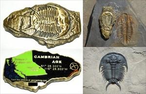 Trilobite (Cambrian Age)
