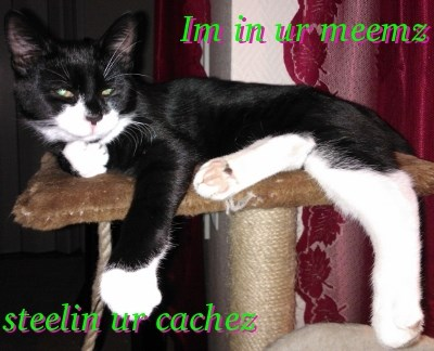 meme kitty
