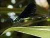 Dragonfly log image