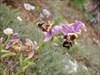 Orquídea selvagem II
