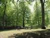 Imponerende bøgetræer