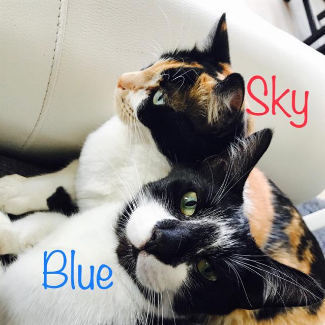 avatar de BlueSky67