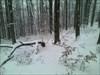 Am Steinköpfl im Winter