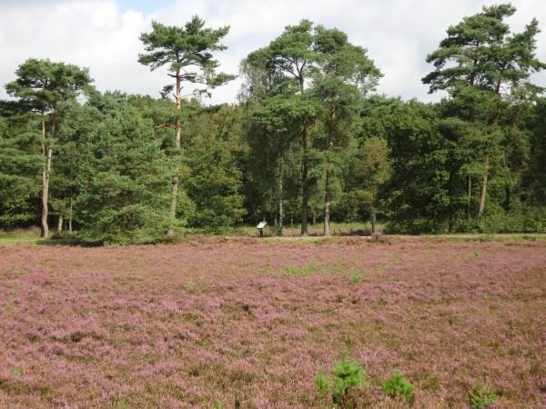 Heideveld voor de watermeter