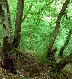 FOTO: steine unter bäumen - hier liegt der schatz