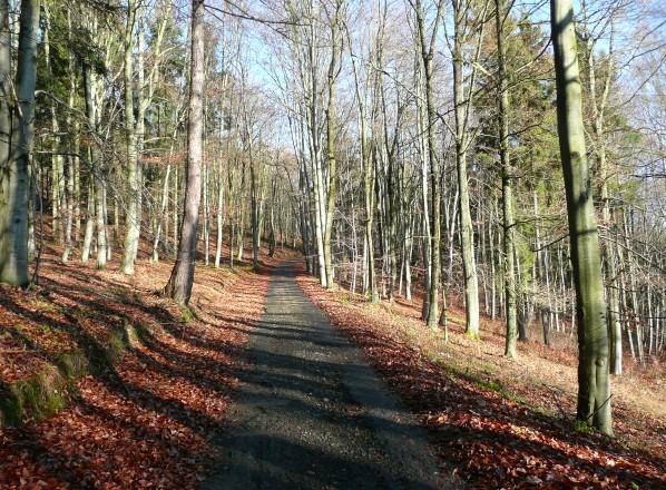 Asfaltka napříč bukovým lesem