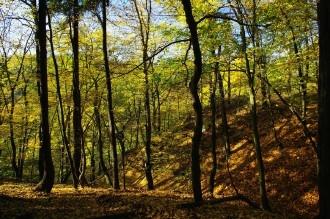Listnaty les na Zabele