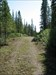 The Forestry Road