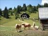 Pferderln