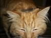 Geocoin on Cat 2
