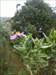 Uma flor e uma casa na linha...