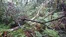 Wald in Trümmern