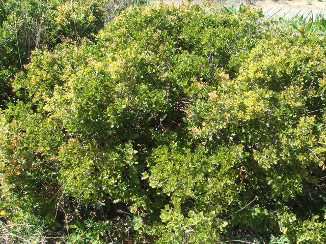 GC737TW Chaparra. Shrub species Odiel (Traditional Cache) in Andalusia, Spain created by nakamateamhuelva