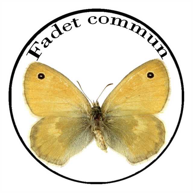 Le Fadet commun